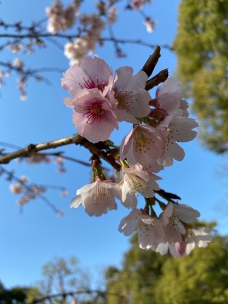 春の予感写真